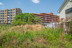 Common scenery of spring. (Yasuyuki Oomagari) Tags: langscape colours weed apartment tree light sunny spring vacant vacantlot green peace peaceful nikon d850 zeiss distagont2821 日本 九州 福岡県 空き地 マンション 春 風景写真 平和