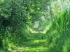 IMG_0113x (gzammarchi) Tags: italia paesaggio natura ravenna marinaromea puntealberete bosco strada sentiero monocrome