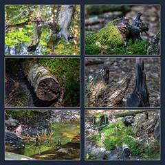 180520_030 (123_456) Tags: parkdehogeveluwe hoge veluwe nederland gelderland otterlo hoenderloo schaarsbergen