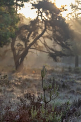 180520_006 (123_456) Tags: parkdehogeveluwe hoge veluwe nederland gelderland otterlo hoenderloo schaarsbergen