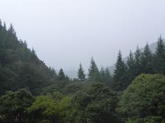 DSCN0107 (Gianluigi Roda / Photographer) Tags: forestecasentinesi toscana appennino latesummer september 2012
