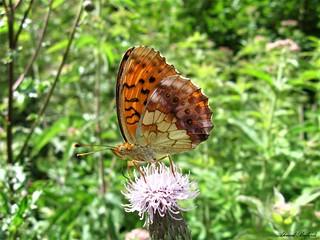 Butterfly 1669