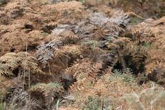 Pareora Dam Walkway (ambodavenz) Tags: pareoradam pareoradamwalkway southcanterbury newzealand fern ferns