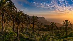 Palm Grove Near Tazo (Jörg Bergmann) Tags: alojera epina ermitasantaclara galión islascanarias lagomera panasonic20mmf17 tazo atardecer canarias canaryislands clouds españa evening gf7 gomera hiking landscape longlight lumix m43 mft micro43 microfourthirds mountain ocean palmgrove palmtrees panasonic puestadesol sea seascape sky spain spring sunset travel vacation valley stitched