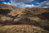 Scotland Campervan -7 (Defi90) Tags: glenfinnanviaduct landscape march scotland skócia uk travel tájkép utazás view