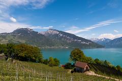 Blick über Thunersee  | Berner Oberland | Schweiz (stgenner) Tags: alpen berge berneroberland frã¼hling grã¼n himmel landschaft natur niederhorn outdoor see spiez thunersee weinberge wolken stefangenner frühling grün