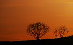 Sunset (s.lang534) Tags: bäume frühling jahreszeiten landscape landschaft licht natur nature olympuse520 saarland schmelz sonne sonnenuntergang sunset wiese deutschland de