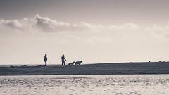 Walking the hounds (RobDotInfo) Tags: family couple dog sunset blackandwhite lagoon beach