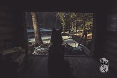Looking out (Storm'sEndPhoto) Tags: 2018 anselsiegenthaler jassa stormsendphotography stormsendphoto aamu aamuvalo adventure animal aurintoinen camping destination dog easternfinland explore fullframe hiking ice icesculptures itäsuomi joensuukaupunki joki jää karelia karjala kevät koski kotajoki laavu lapinporokoira lapponianherder morgenlicht morning morninglight myllykoski nikon nikonphotography paimenpojanpolku pet pohjoiskarjala polku rapids reitti retkeily river spring traveldestination trekking tuupovaara tuupovaaranreitti vekarus карелия