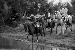 Cruzando el río. Crossing the river. (.Guillermo.) Tags: bw blancoynegro blanckandwhite river rio horse horses caballo caballos paisajes paisaje landscapes landscape nikon