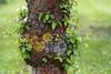 Schloss Dyck (dorothea knie) Tags: baum tree blatt leave frühling spring grün green flechte lichen