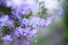 A flower to remember (Baubec Izzet) Tags: baubecizzet pentax bokeh flower nature spring