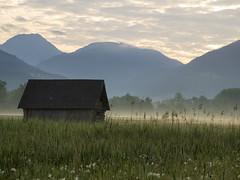 P5120018 (turbok) Tags: blumenwiese landschaft rosswiese wiesen c kurt krimberger