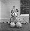 (Attila Pasek) Tags: 120film 3200 6x6 bronicasqa delta ilford analogue bw blackandwhite film mediumformat street teddybear toy