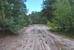 Волинський ліс Лісова дорога InterNetri Ukraine 0316453139