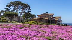 IMG_8429 (boguscoder) Tags: pacificgrove california unitedstates us