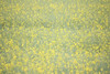 Waterworld (Fabien Husslein) Tags: ocean or champ field gold nature