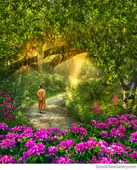 """""""The Path to Inner Peace"""" (Good Vibes Gallery.com) Tags: garden park tree rhododendron hydrangea nuthatch flowers forest monk buddha buddhist statue zen tao meditation yoga reiki taoism buddhism nature landscapes mountains streams valleys sunrise sunset peace namaste peaceful spiritual energy love light chakra hippy new age consciousness waves beauty surreal surrealism oil painting acrylics fine art photography awakening hippie boho bohemian wanderlust red orange yellow green blue purple white cream pink"""