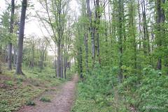 Ботанічний сад імені Гришка Буковий гай InterNetri  Ukraine 116
