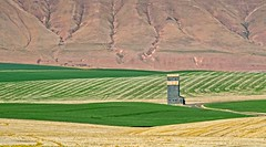 Wheat Fields Grain Elevator Columbia River Gorge 7600 A (jim.choate59) Tags: grainelevator wheat field wheatfield rural jchoate on1pics spring springtime oregon columbiarivergorge columbiariver shermancounty landscape farm d610