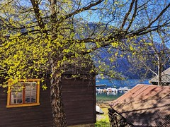 spring day (ekelly80) Tags: norway april2018 spring møreogromsdal geiranger geirangerfjord town sunny sun bright cute springday wooden house shop painted window tree glow leaves branches view water fjord boats harbor marina beautifulday