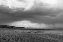 Lauriston and Crammond with Alastair April 2018 (100 of 126) (Philip Gillespie) Tags: crammond lauriston castle keep gardens park green blue red yellow orange colour color mono monochrome black white sea seascape landscape sky clouds drama dramatic walkway path flowers leaves trees april spring defences canon 5dsr people rust metal grafitti man dog petals bluebells dafodils holly blossom pond forth water wet rain sun reflections architecture mirrors gold japan garden sunlight scotland