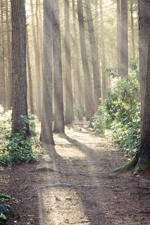 Paths of illumination