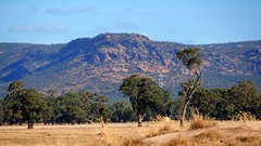 Grampians (Ross Major) Tags: grampian ranges victoria landscape mountains sky trees grass forest australia