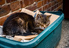 Cat in the box (aquanout) Tags: cat feline moggie pet bricks whiskers