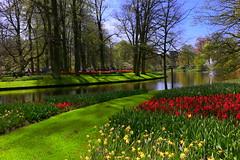 Keukenhof (annalisabianchetti) Tags: keukenhof garden giardino green park parco spring springtime primavera travel flowering flowers fiori trees alberi holland olanda europa nature natura