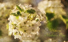 Happy Mother's Day (socalgal_64) Tags: carolynlandi usa tree peartree blossoms pearblossoms love mom mother flowers leaves happymothersday iloveyoumom pennsylvania lehighvalley coth5