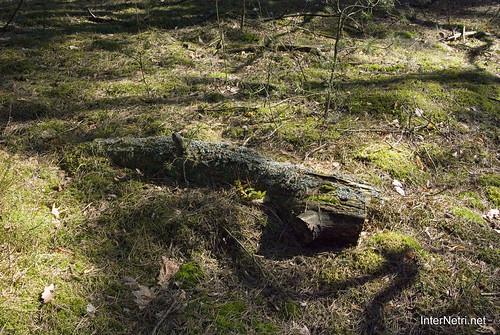 Волинський ліс Мох InterNetri Ukraine 1617118910