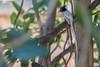 Wild Birds (csahasrangshu) Tags: indian birds smallbirds worldbirds wildbird yearofbird nature animals yourbestbirds bird birdsofinstagram birdstagram birdwatching instabird birdphotography birding instabirds wildlife bestbirdshots wildlifephotography nutsaboutbirds budgie kingsbirds birdlover birdlovers featherperfection birdfreaks pocketbirds vogel allmightybirds animal love eyespybirds igbirdwatchers sassybirds igdiscoverbirdslife bnsbirds sahasrangshuphotography sahasrangshu