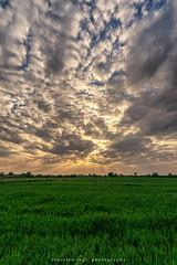 clouds (fotos_by_toddi) Tags: niederrhein nrw fotosbytoddi voerde wolken wolke clouds cloudy sonne strahlen wiesen wiese sony sonya7 sonyalpha7 sky sonnenuntergang sun alpha a7 alpha7 tier gras himmel baum feld sonnenstern landschaft