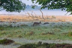 180520_003 (123_456) Tags: parkdehogeveluwe hoge veluwe nederland gelderland otterlo hoenderloo schaarsbergen