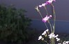 img076 (kaz_Pinguist) Tags: asahiflexiia film filmcamera fujicolor100 saitama 20180520