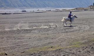 INDONESIEN, Java, Pferde und Reiter in der Caldera (Salndmeer) am Bromo, 17501/10077