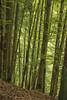 Spring Greens (Eddie Hyde ARPS) Tags: france alps savoie