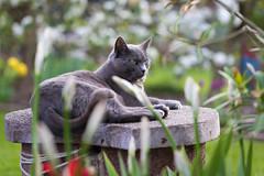 the queen on her throne ;-) (explored) (Jana`s pics) Tags: cat cats katze katzen animal tier haustier pet spring frühling outdoor drausen garten garden