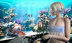 Hi, Fishy Fishy Fishy! (Kush Klokanica) Tags: momo top pixelgeek pixel geek mesh fashion femboy femboi vtech blog avatar portrait closeup sl secondlife feminine kush