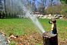 Spring Spray (121/365) (robjvale) Tags: nikon d3200 adventurerjoe lego project365 sprinkler water spring yard garden grass spray