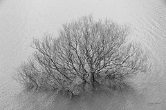 (Noaran) Tags: árbol tree blackwhite blancetnoire brancoepreto blancoynegro monocromático monochrome monocromo minimal minimalism minimalismo nikond750 nikon agua water pantanodebarriosdeluna pantano embalse