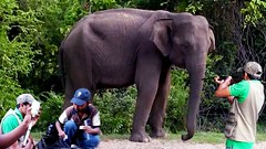 Failed attempt on tranquilizing a wild elephant (THE WILD ELEPHANT) Tags: huge elephant rescue video youtube quite baby funny kids videos the wild wildlife news tv
