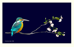 Cherry and common kingfisher (Japanese Flower and Bird Art) Tags: flower cherry prunus rosaceae bird common kingfisher alcedo atthis alcedinidae hiromitsu sakai modern digital print japan japanese art readercollection