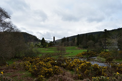 DSC_0240_00001 (Marcello Guarino) Tags: glendalough monastery cemetery wicklow ireland tower trees nature eire ulster landscape