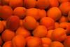 Apricots (Alfredo Liverani) Tags: weeklythemechallenge wtc colourorange canong5x canon g5x pointandshoot point shoot ps flickrdigital flickr digital camera cameras