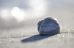 (amy20079) Tags: shell seashell ocean sand beach maine newengland nikond5100 macro depthoffield bokeh