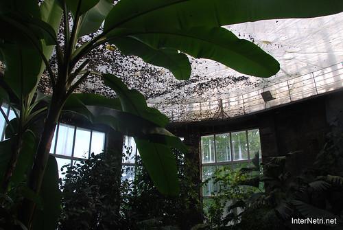 Екзотаріум Ботанічного саду імені Гришка, Київ InterNetri  Ukraine 06