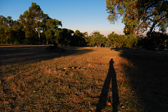 Long shadows (LeelooDallas) Tags: western australia perth julimar landscape bush dana iwachow nikon coolpix s9200 sun sunset tree forest camping