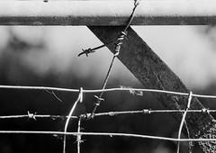 Barbed Wire (graemes83) Tags: pentax kodak eastman 5222 double x xx film 35mm 135 d96 black white monochrome